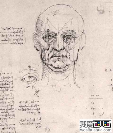 达芬奇素描头像和头部侧面分析(2)