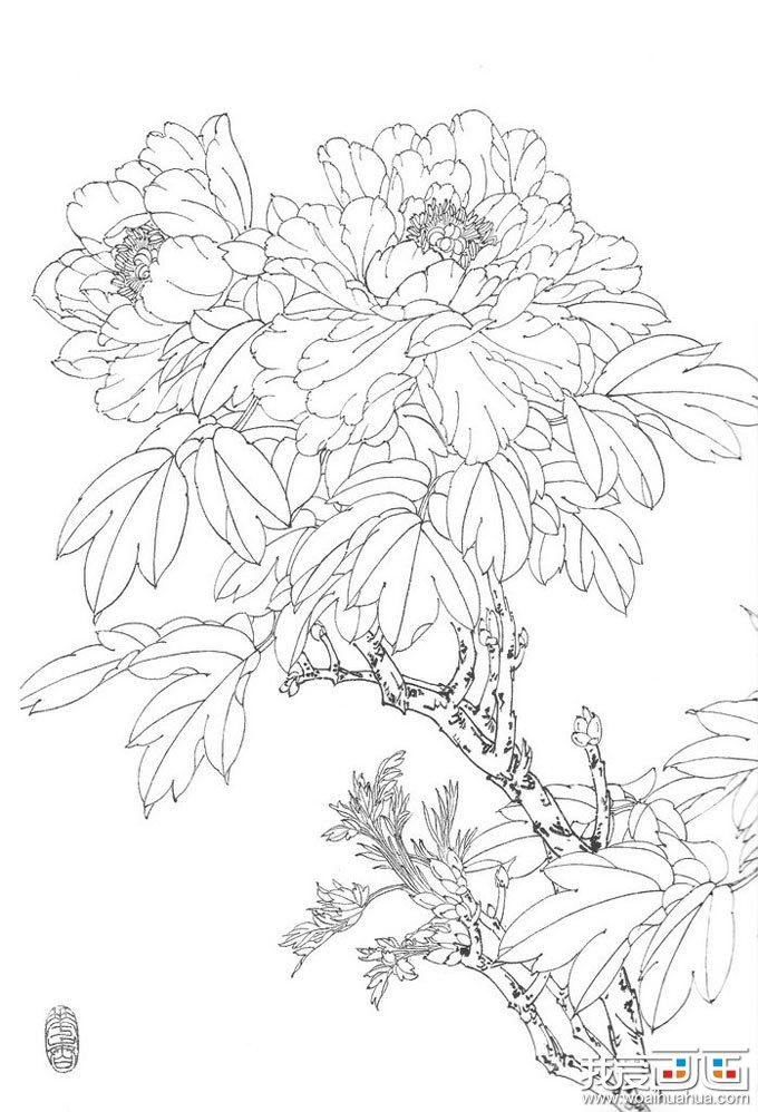 国画白描牡丹10副,王少卿白描牡丹花卉高清图片(6)