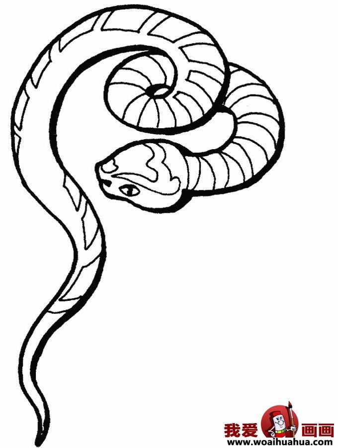 简笔画蛇-11张蛇的简笔画图片(2)
