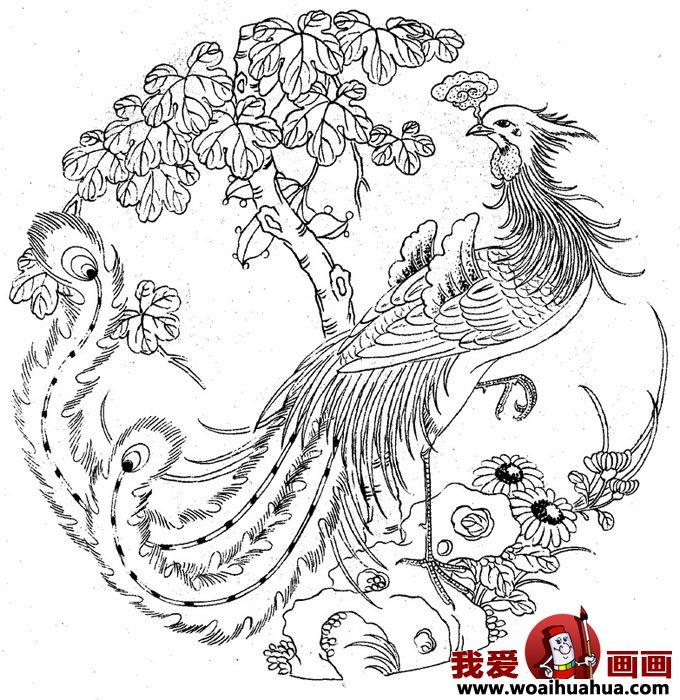 什么是凤凰,关于凤凰的白描绘画图片组图(4)