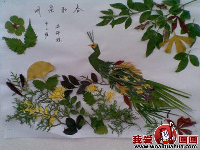 树叶粘贴画图片:孔雀图片