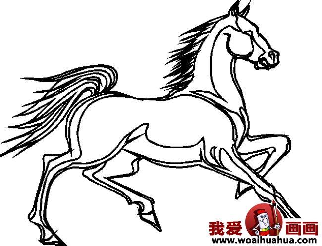 简笔画马,关于马的简笔画10副(2)