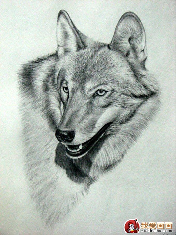 动物素描画:超级写实动物素描图片以假乱真(7)