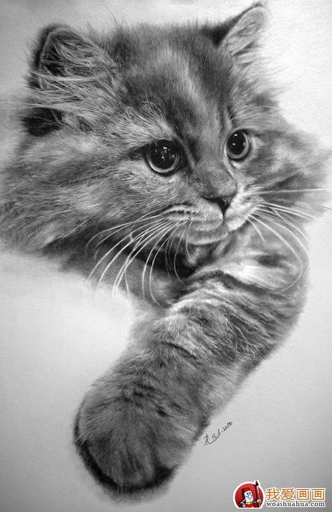 学画画 素描教程 素描动物  第8页(共10页) 相关文章
