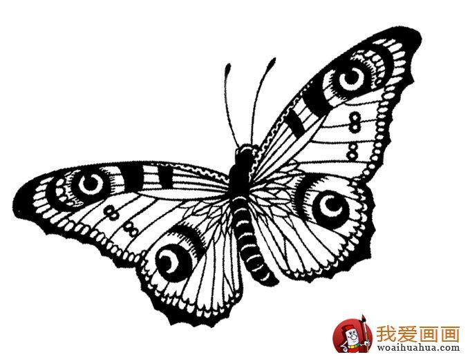 儿童简笔画蝴蝶,美丽的花蝴蝶简笔画图片(4)