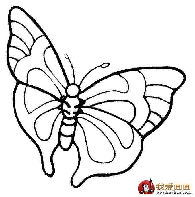 儿童简笔画蝴蝶,美丽的花蝴蝶简笔画图片