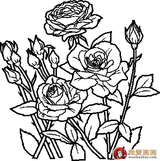 简笔画花卉大全,各种植物花儿简笔画图片26副(下)(2)