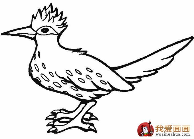 简笔画小鸟图片:小鸟简笔画图片大全