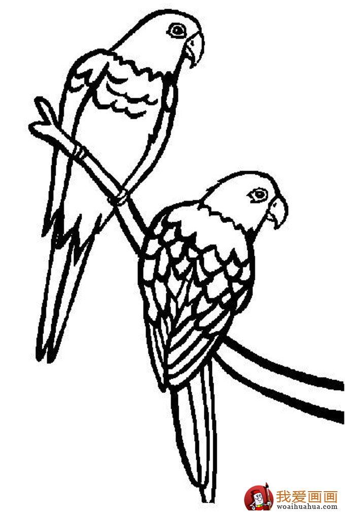 简笔画小鸟图片:小鸟简笔画图片大全(5)