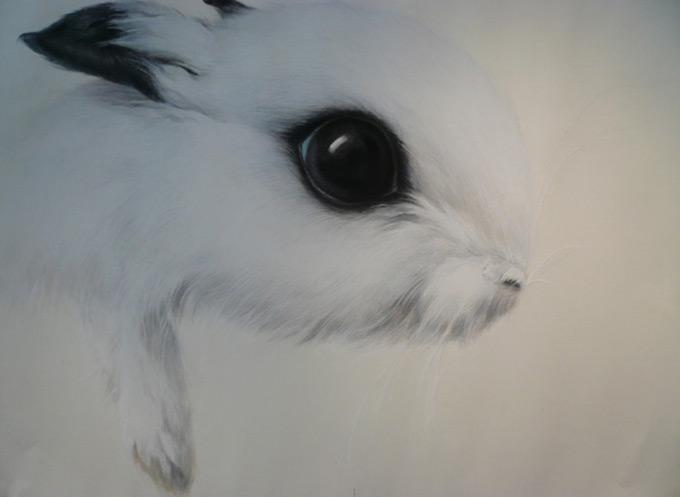壁纸 动物 兔子 680_497