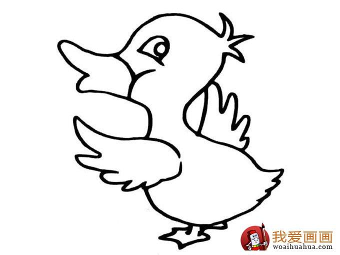 小鸭子简笔画图片:各种简笔画鸭子画法(10)
