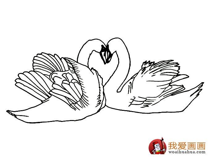 简笔画天鹅:7副高清天鹅的简笔画图片