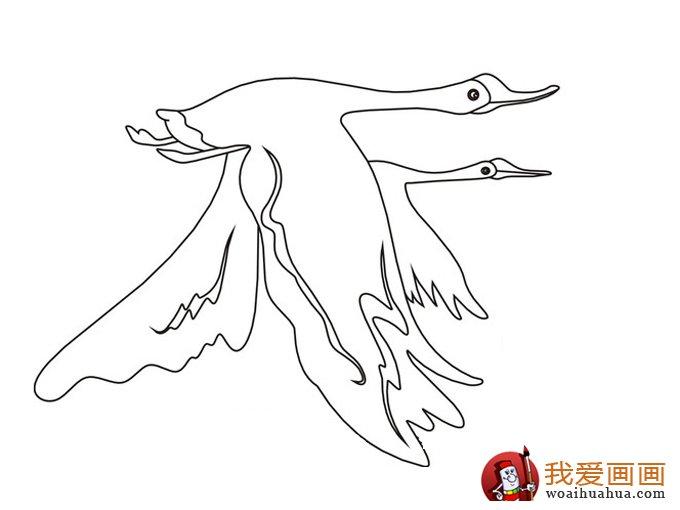 简笔画天鹅:7副高清天鹅的简笔画图片(6)