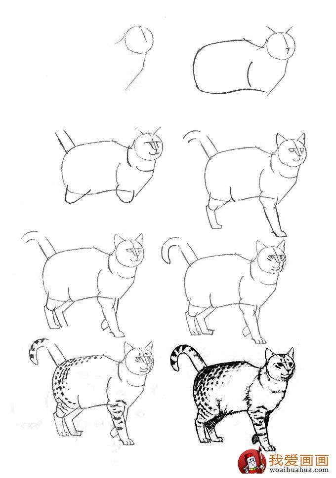 学画画 素描教程 素 > 猫的22种画法(9)猫咪线描速写教程之狸猫行走
