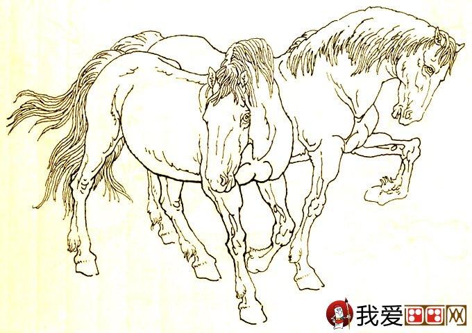 马的素描图片大全 马的白描图骏马线描画法大图34副 4图片
