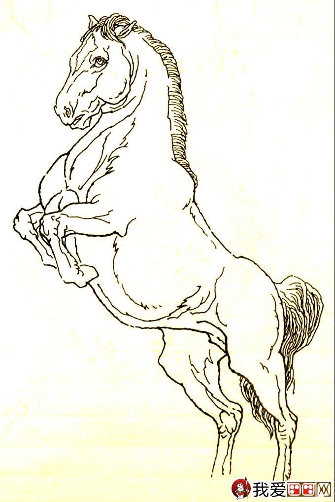 马的素描图片大全 马的白描图骏马线描画法大图34副 7图片