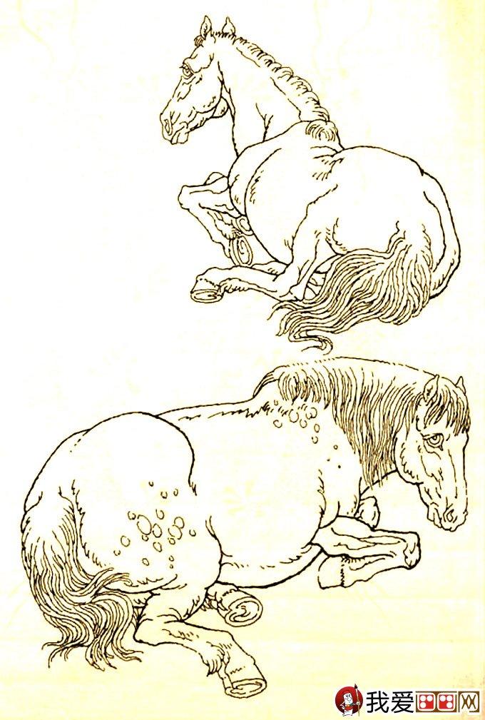 马的素描图片大全 马的白描图骏马线描画法大图34副 14图片