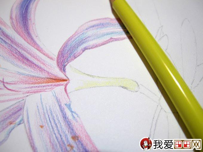 彩铅画花卉绘画教程 彩色铅笔画石蒜的手绘过程(10)