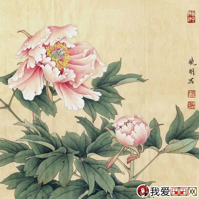 李晓明工笔牡丹步骤大图128张