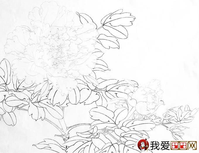 信息中心 李晓明工笔牡丹(赵粉)设色步骤   李晓明工笔牡丹画法http