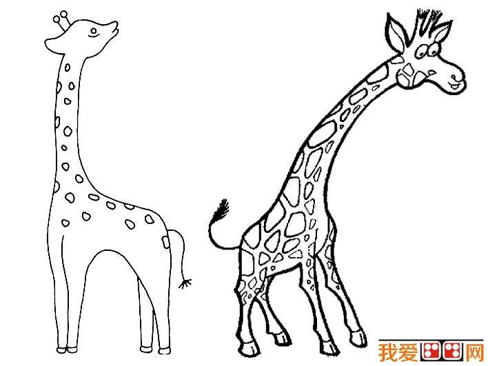 长颈鹿简笔画图片大全(2)