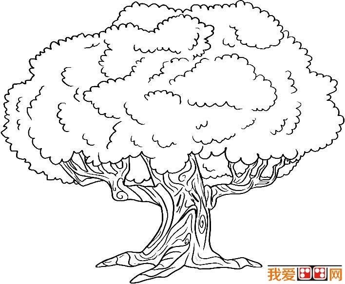 大树简笔画,各种各样的树简笔画图片(2)