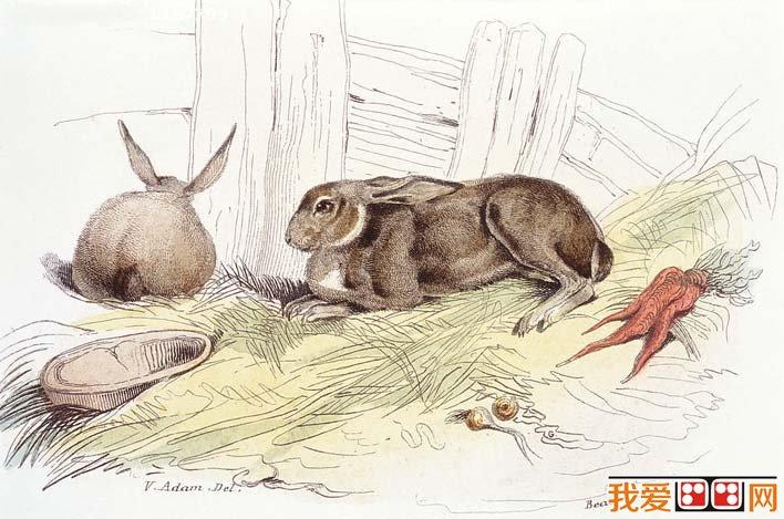 北极动物简单的铅笔画