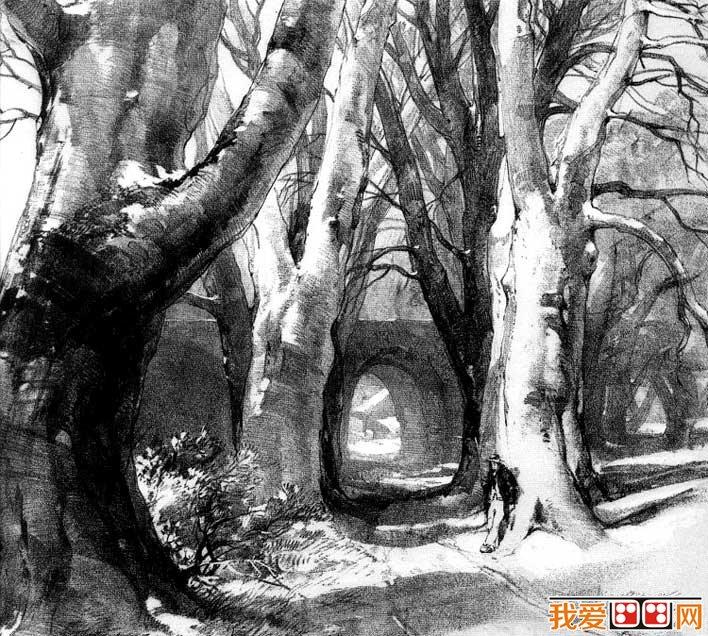 国外关于树的素描风景图片,各种各样素描树的写生作品