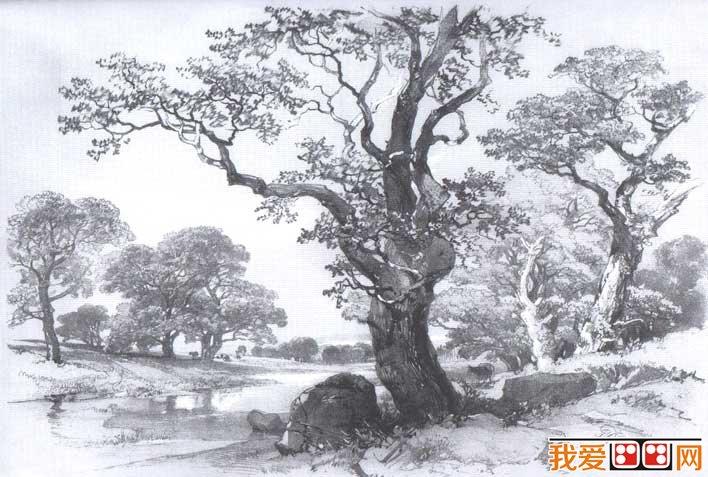 国外关于树的素描风景图片