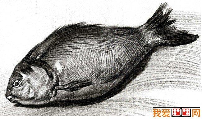 素描鱼-学好素描的第一步 理解素描图片