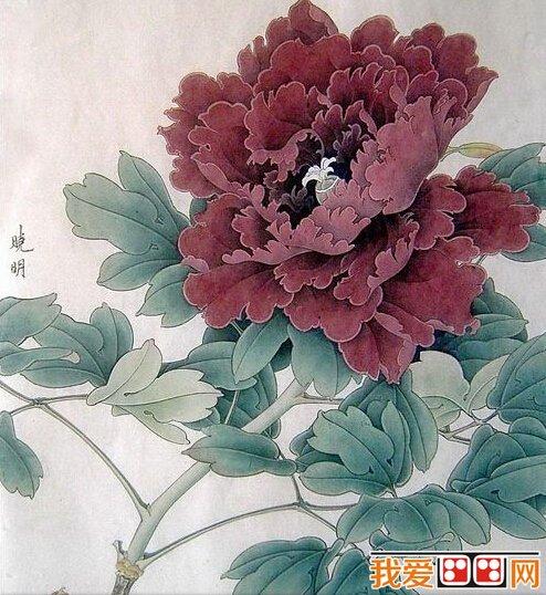 中国画教程:牡丹工笔画教程