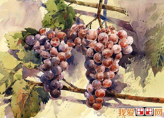 德国艺术家水彩画葡萄作品欣赏之一