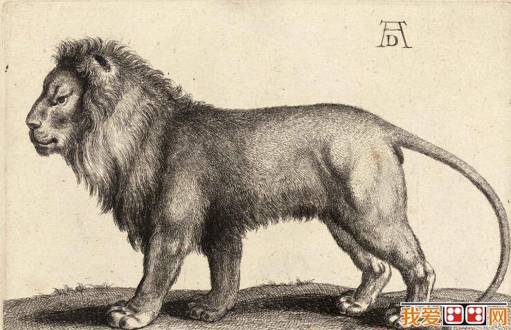 德国著名画家丢勒素描动物作品欣赏(2)