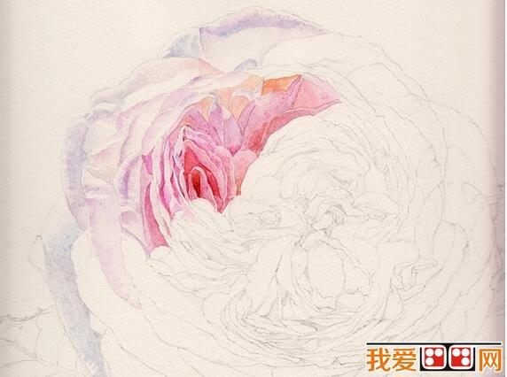 漂亮的玫瑰花水彩画教程步骤详解(2)