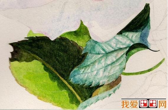 漂亮的玫瑰花水彩画教程步骤详解(6)