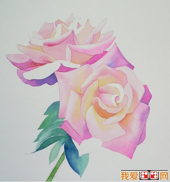 月季花水彩画教程步骤解析 三、用绿色和蓝色画茎,花的暗部用紫色和茜草红色。