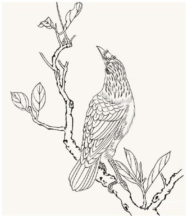 工笔画花鸟入门:工笔画八哥的绘画教程