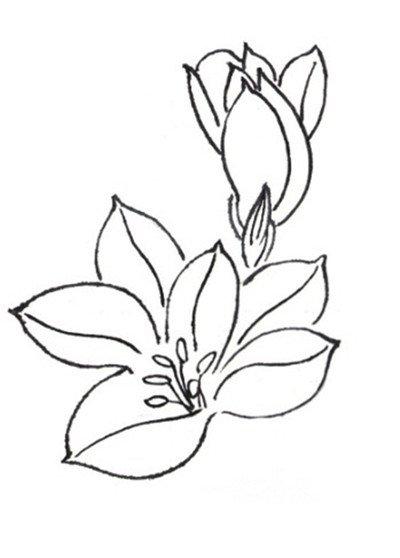 白描马兰花的绘画技法
