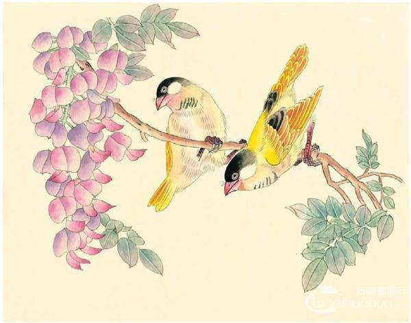 工笔画芙蓉鸟的绘画入门步骤教程(4)