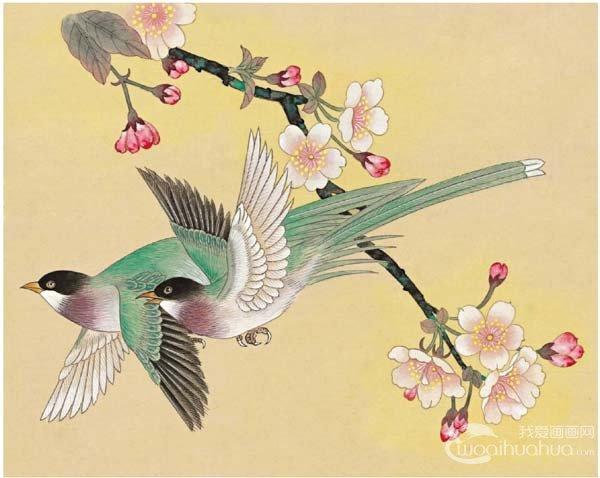 工笔绶带鸟的绘画步骤入门教程(5)_国画教程_学画画