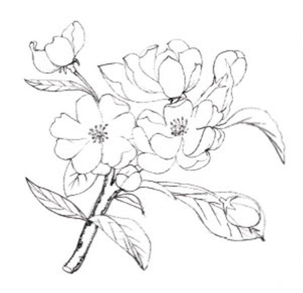 简易铅笔手绘花朵