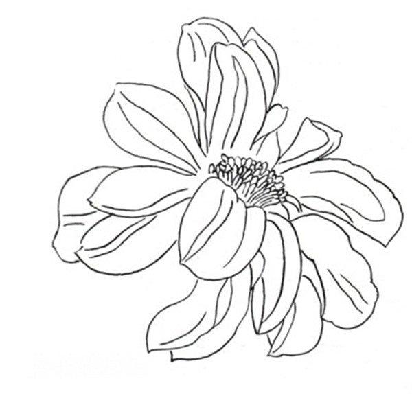 工笔白描大丽花手法与绘画步骤教程(2)_国画教程_学