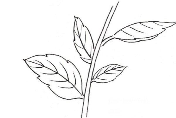 绘画 教程 7,枝干和叶子的画法 工笔白描大丽花的画法 8,白描花卉局部