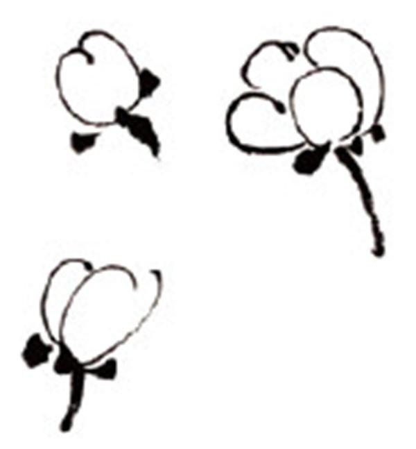 水墨画梅花绘画步骤教程(3)