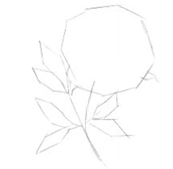 彩铅牡丹的绘画步骤_学画画_我爱画画网_一个免费学的