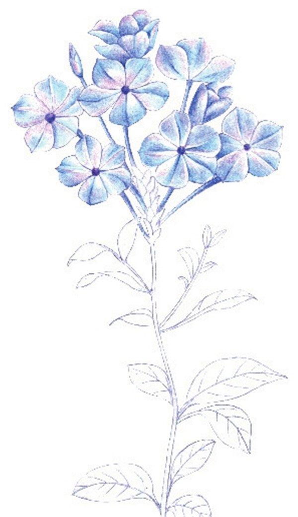 学画画 其他绘画教程             4,填充花朵颜色    5,加深花朵暗部