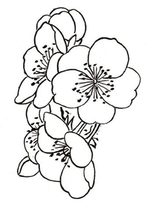 学画画 国画教程 工笔画     花朵组合的形态    花朵组合的形态