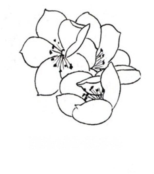 白描桃花鸟鸣的绘画步骤(2)