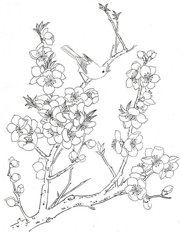 学画画 国画教程 工笔画     二,桃花鸟鸣白描    枝干有粗有细,枝干