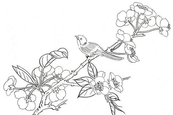 工笔水草的绘画步骤
